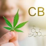 Fleur de CBD Critical : que faut-il savoir?