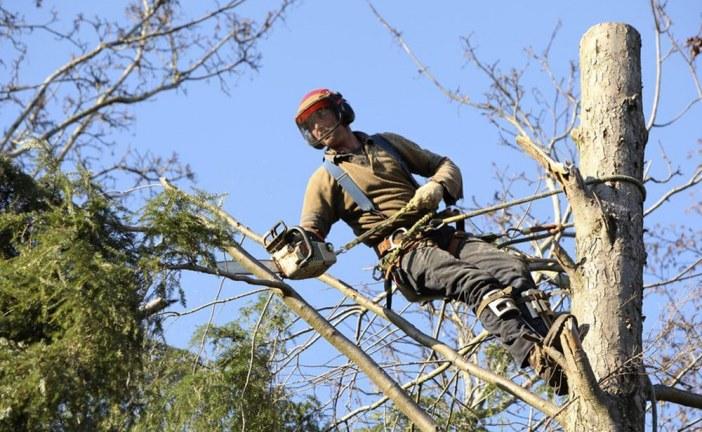 7 questions principales que vous devez vous poser avant l'élagage des arbres