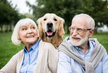Animal de compagnie pour une personne âgée