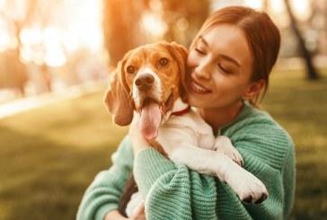 Top 10 des plus beaux chiens de race