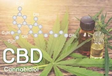 Quels sont les bienfaits de l'huile de CBD sur la peau?