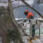 Tout savoir sur l'élagage d'un arbre